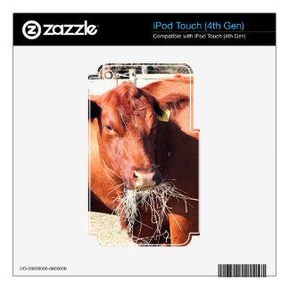 Vaca que come el heno en granja skins para iPod touch 4G