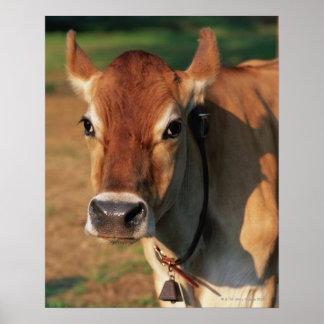 Vaca que lleva un cencerro impresiones