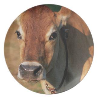 Vaca que lleva un cencerro platos para fiestas