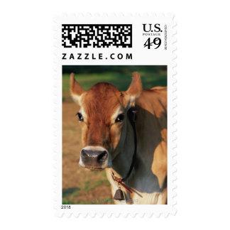 Vaca que lleva un cencerro sello