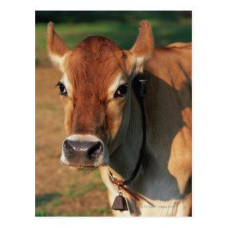 Vaca que lleva un cencerro tarjeta postal