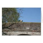 Vaca que mira sobre el canal Notecard de Llangolle Tarjeton