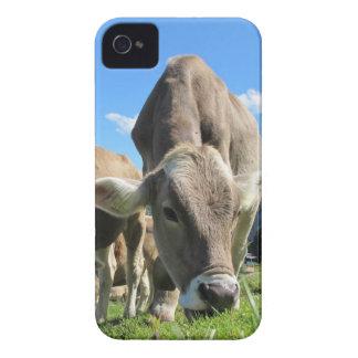 Vaca que pasta el caso del iPhone 4 Funda Para iPhone 4
