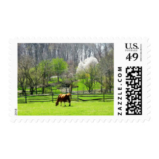 Vaca que pasta en pasto en primavera timbres postales