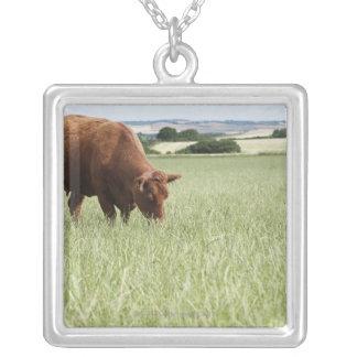 Vaca que pasta en prado colgante cuadrado