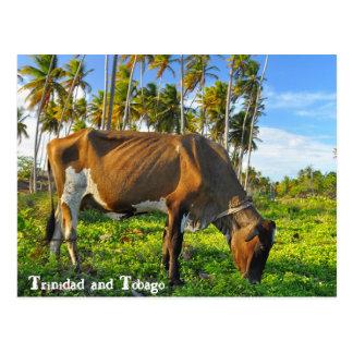 Vaca que pasta entre árboles de coco postal