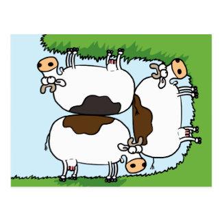 Vaca que pasta tarjetas postales