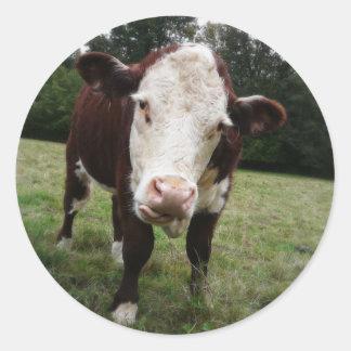 Vaca que pega hacia fuera la lengua etiquetas redondas