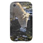 Vaca que que lame una sal del bloque tough iPhone 3 carcasas