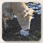 Vaca que que lame una sal del bloque posavasos de bebidas