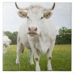 Vaca que se coloca en campo herboso tejas  ceramicas