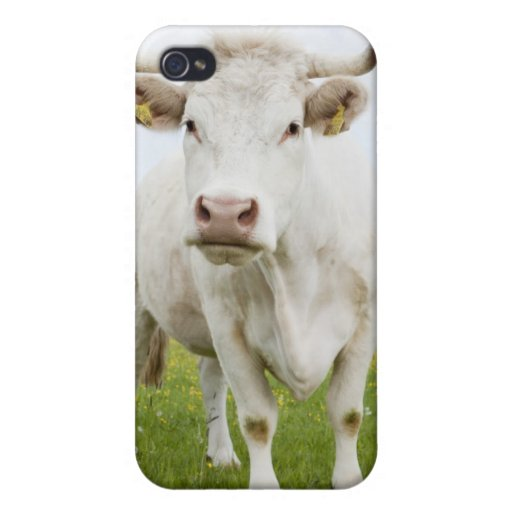 Vaca que se coloca en campo herboso iPhone 4 carcasas