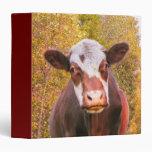 Vaca roja curiosa