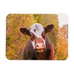 Vaca roja curiosa iman flexible