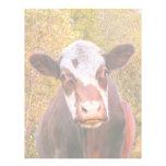 Vaca roja curiosa plantillas de membrete