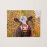 Vaca roja curiosa puzzle con fotos
