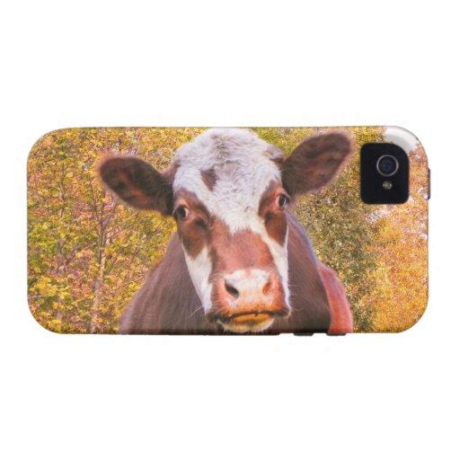 Vaca roja curiosa vibe iPhone 4 fundas