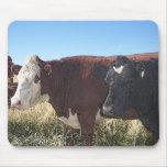Vaca roja del negro de la vaca alfombrillas de ratones