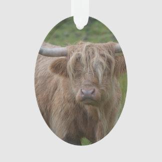 Vaca rubia lanuda de la montaña