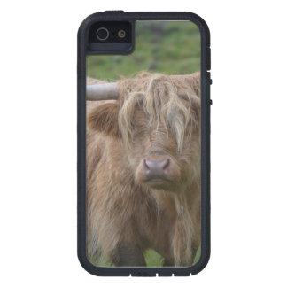 Vaca rubia lanuda de la montaña iPhone 5 fundas