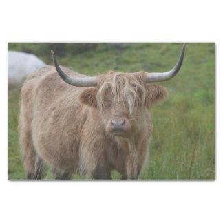 Vaca rubia lanuda de la montaña papel de seda pequeño