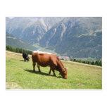 Vaca suiza tarjeta postal