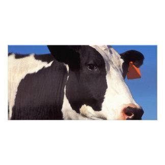 Vaca Tarjeta Fotográfica Personalizada