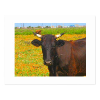 Vaca Tarjetas Postales