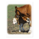 Vaca y becerro 9P022D-160 Postal