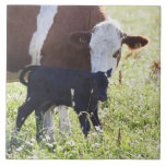 Vaca y becerro azulejo ceramica