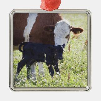 Vaca y becerro adorno cuadrado plateado