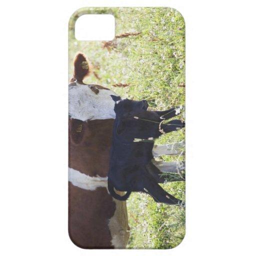 Vaca y becerro iPhone 5 carcasa