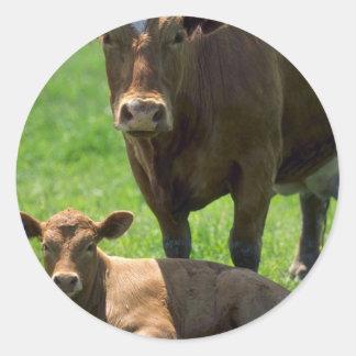 Vaca y becerro pegatina redonda