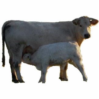 Vaca y becerro pendientes adorno fotoescultura