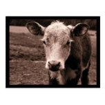 Vaca y mosca tarjeta postal