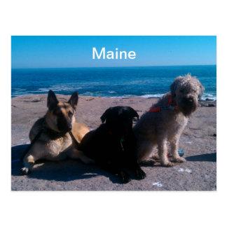 Vacaciones de Maine Tarjeta Postal
