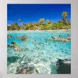Vacaciones exóticas poster