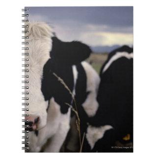 Vacas 3 libreta
