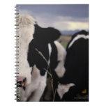 Vacas 3 libreta espiral