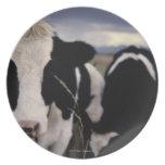 Vacas 3 plato de cena
