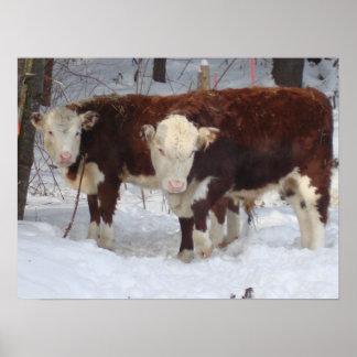 Vacas acogedoras poster