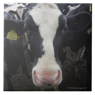 Vacas Azulejo Cuadrado Grande