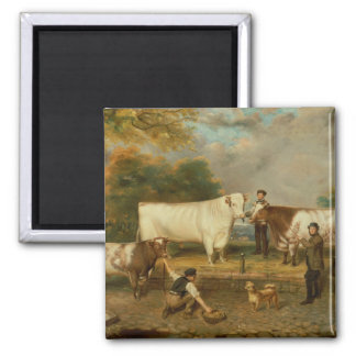 Vacas con un ganadero imán cuadrado