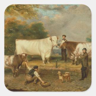 Vacas con un ganadero pegatina cuadrada
