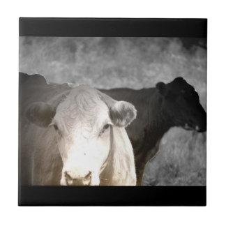 Vacas curiosas azulejos