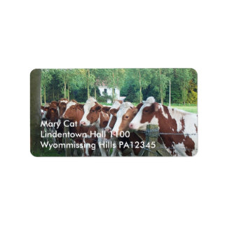 Vacas curiosas etiquetas de dirección