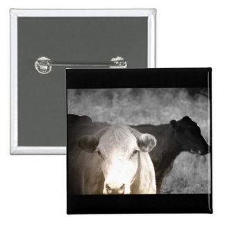 Vacas curiosas pin
