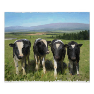 Vacas curiosas póster