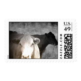 Vacas curiosas sellos