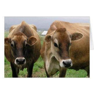 Vacas curiosas tarjeton